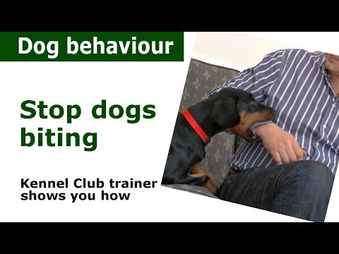 Xxx Mp4 How To Stop A Puppy From Biting Expert Advice From A Kennel Club Expert 3gp Sex