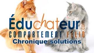 L'ÉDUCHATEUR - Introduire un nouveau chat à la maison