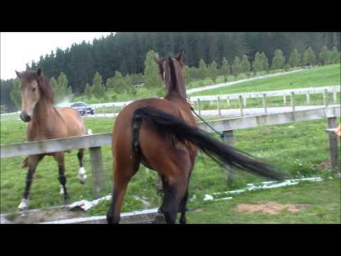 Horse Piss Fart