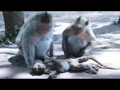 Poor Baby Dead Coz' Traffic Accident Daily Monkeys Man #313