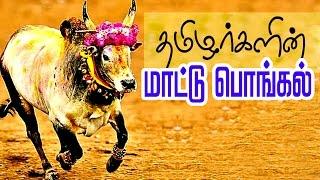 Mattu Pongal Celebration in Tamil || Jallikattu Festival of Tamil Nadu