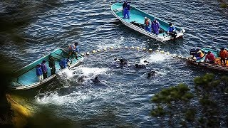 Killing Dolphins in The Cove Taiji Japan