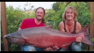 World's Biggest King Salmon Ever Caught