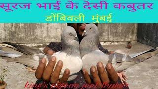 SURAJ.P. MHATRE BHAI KE  DESI KABUTAR DOMBIVALI MUMBAI