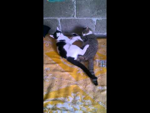 Xxx Mp4 Gatos 3gp Sex