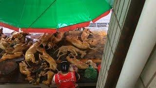 شاهد: مهرجان سنوي في الصين لأكل لحوم الكلاب وضغوط لإلغائه …