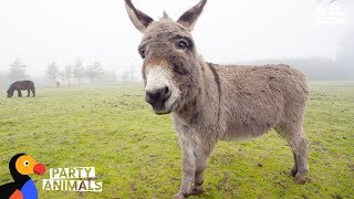 Donkey and Woman Who Both Lost Children Celebrate Their Emotional Journey | The Dodo Party Animals