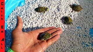 MINI POOL Pond for BABY TURTLES!
