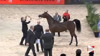 N.63 ABHA QALAMS - Paris 2015 - 4+ year old mares (Class CM3 B)
