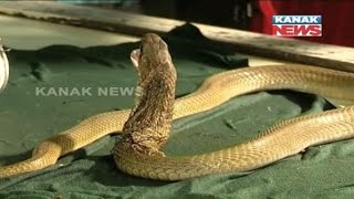 OUAT Doctors Rescued Cobra Stuck In A Beer Can