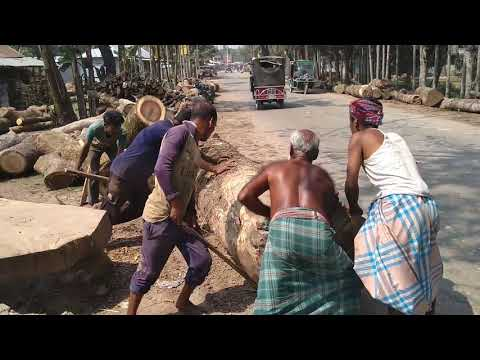 Tough Very Dangerous and Tough Wood Cutting and Lifting by 10 Powerful Men in Saw Mill of Aisa