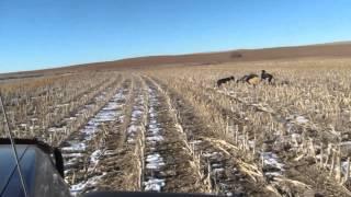 KS Coyote Hunt