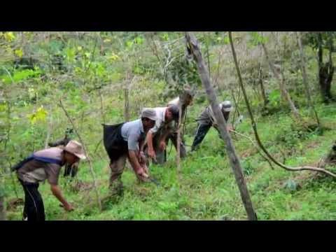 Xxx Mp4 MGNREGS In Champhai District 3gp Sex
