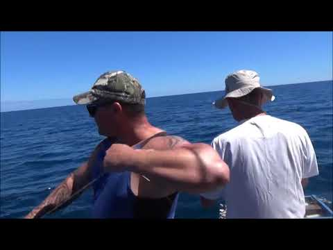 Longline Fishing off the Manawatu Heads