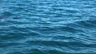 Dolphin Bay in Persian Gulf
