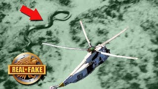 195FT SNAKE CAUGHT ON CAMERA - real or fake