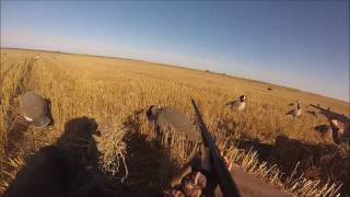 2015 Duck & Goose Hunting in ND
