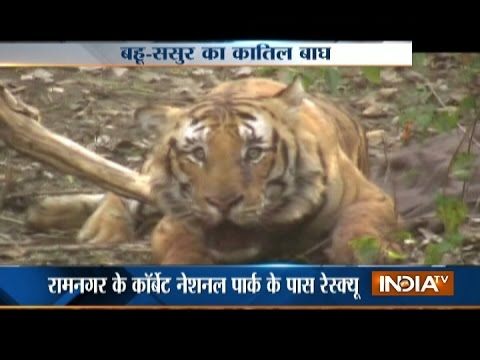 Xxx Mp4 Tiger Kills Two In Uttarakhand S Ramnagar 3gp Sex