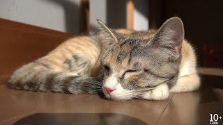 猫の避妊手術。成長の早いモモ Cat Spay,  Momo grow up fast