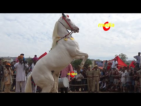 Hourse Dance in Pushkar Cattele Mela in Rajasthan 2014