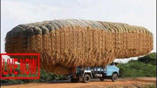 World Amazing Bizarre Modern Agriculture Equipment Mega Machines: Hay Bale Handling Thresher T #SON
