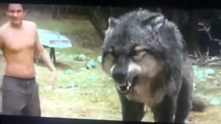 Jacob vs Paul Full Wolf Fight