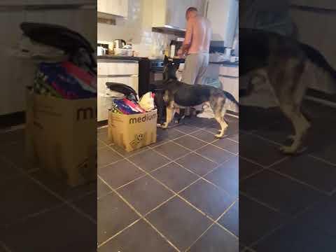 Xxx Mp4 Meet My Dog Xxxxx🐶🐕 3gp Sex