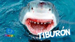 El Tiburón | Videos Educativos para Niños