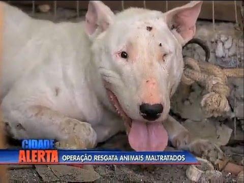 Animais usados em rinhas são resgatados no Rio