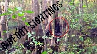 5 Bigfoot Sightings Caught On Tape (2016)
