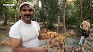 اب وابنائه وابنته يزاولون الزراعة بالاحساء | سناب الاحساء