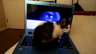 When my Kitty is watching Sorry Sorry (by Super Junior)