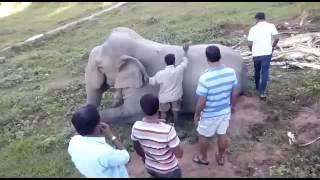 How to Mount an Elephant 🐘 in Kaziranga