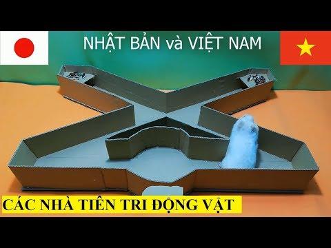 Xxx Mp4 Việt Nam Vs Nhật Bản Các Nhà Tiên Tri động Vật Dự đoán Trận Vietnam Vs Japan 1 4 Asiancup 2019 3gp Sex