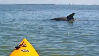 Florida Outdoor Center - Kayak, Cycle, Hike - Tour Guide Indian River County, Sebastian, Florida.mp4