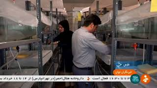 Iran Medical Leech farming report, Shiraz county پرورش زالوي پزشكي شيراز ايران