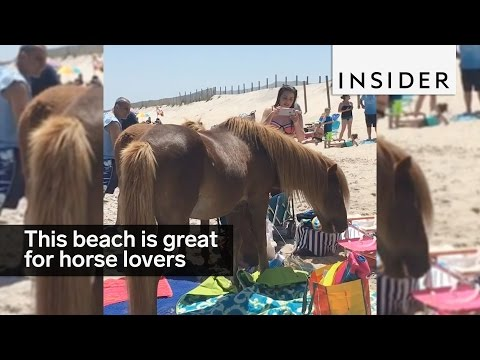 This beach is paradise for horse lovers
