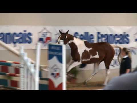 ♥ Timba de Flo- jumping horse  by Limbo