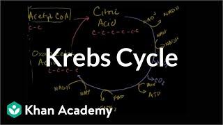Krebs / citric acid cycle   Cellular respiration   Biology   Khan Academy