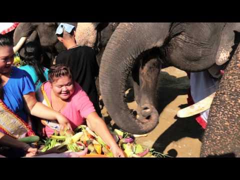 Xxx Mp4 Thailand Jumbo Queens Feed Elephants In Jumbo Banquet May 1st 2014 3gp Sex