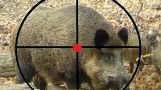 Lov divlje svinje Snijeg na Manjači 2016 - divlja svinja lov