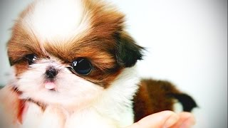 Small Pets 2017 ★ Best Pet Videos for Kids [Funny Pets]