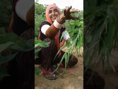 Xxx Mp4 Desi Comedy Marwadi Video 3gp Sex