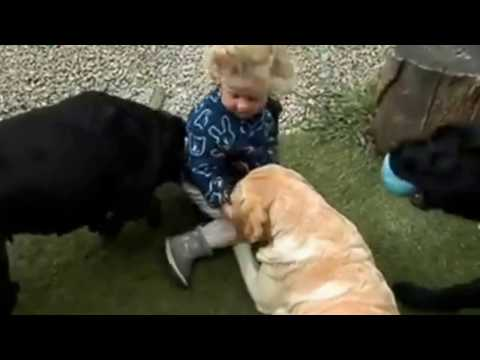 Baby girl playing with big dogs