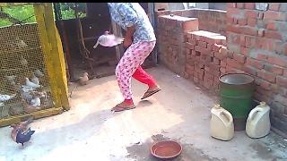 Catching a stranger pigeon in stand up position    ajnabi kabutar ko apni chaat sey pakadna