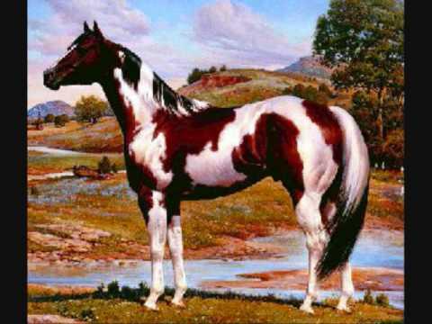 Horses jumping xxx.wmv
