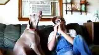 Blues Dog