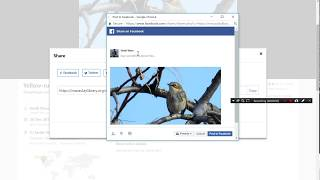 How to share your eBird photos to Facebook