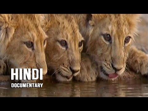 Xxx Mp4 Gir Forest National Park Hindi Documentary 3gp Sex