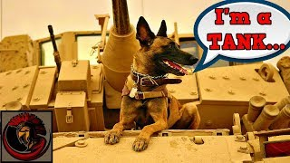 What Equivalent Would a Tank Be to a Dog?
